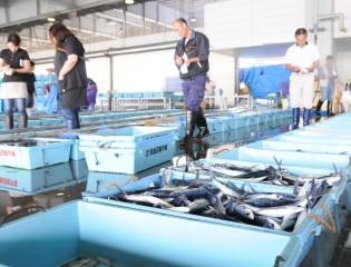 気仙沼魚市場(東洋一の魚市場とも言われる)